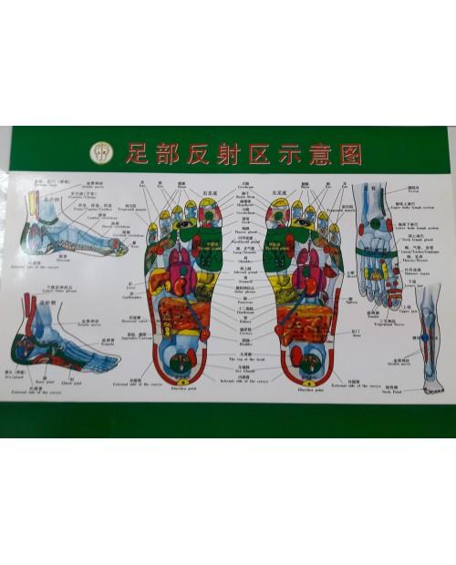 LAMINA REFLEXOLOGIA A4 CHINA